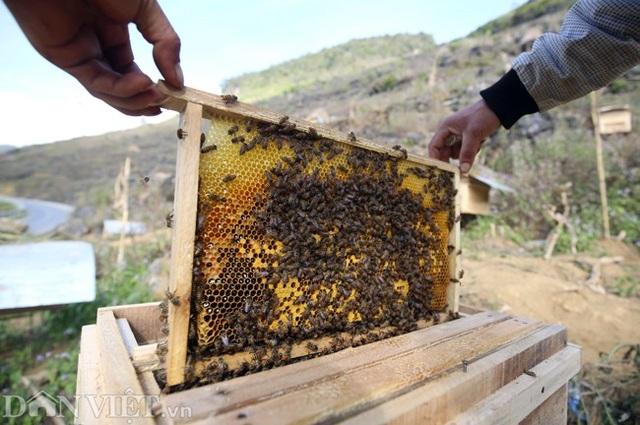 Nghề lạ ở Hà Giang: Nuôi ong trên đá - 9