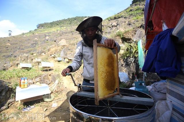 Nghề lạ ở Hà Giang: Nuôi ong trên đá - 10