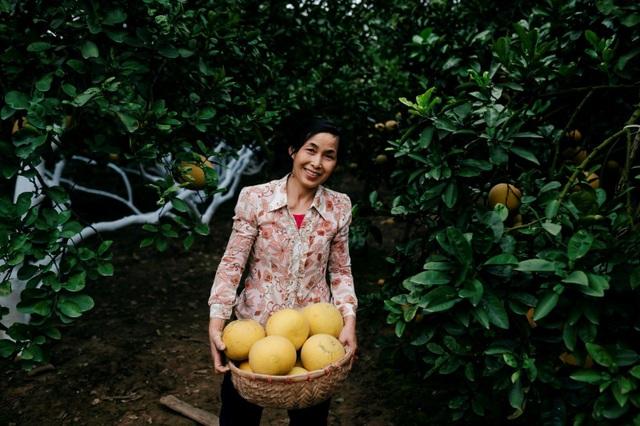 Người dân Phường Phú Diễn thu hoạch bưởi cho Tết Nguyên đán Kỷ Hợi - Ảnh 3.
