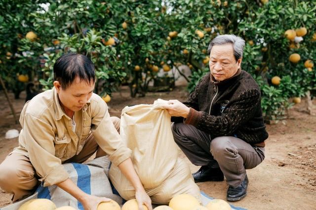 Người dân Phường Phú Diễn thu hoạch bưởi cho Tết Nguyên đán Kỷ Hợi - Ảnh 5.