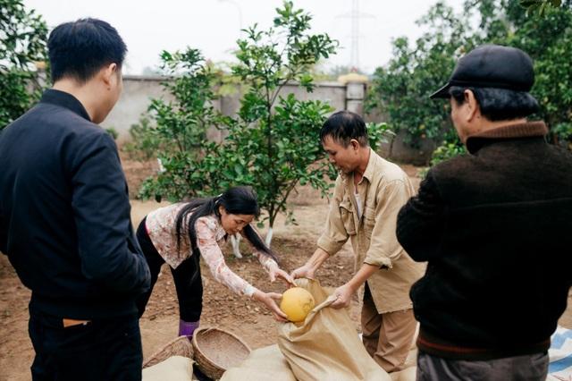 Người dân Phường Phú Diễn thu hoạch bưởi cho Tết Nguyên đán Kỷ Hợi - Ảnh 8.