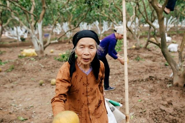 Người dân Phường Phú Diễn thu hoạch bưởi cho Tết Nguyên đán Kỷ Hợi - Ảnh 10.