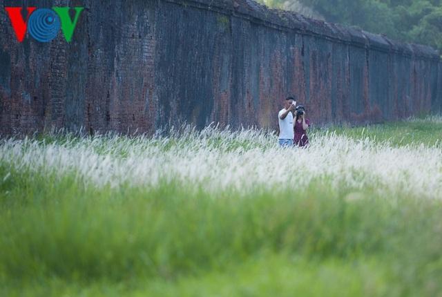 Thơ mộng điểm check in cỏ lau giữa Cố Đô Huế - 10