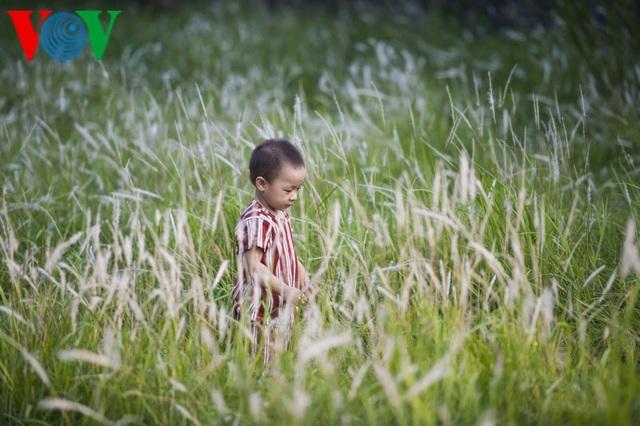 Thơ mộng điểm check in cỏ lau giữa Cố Đô Huế - 11