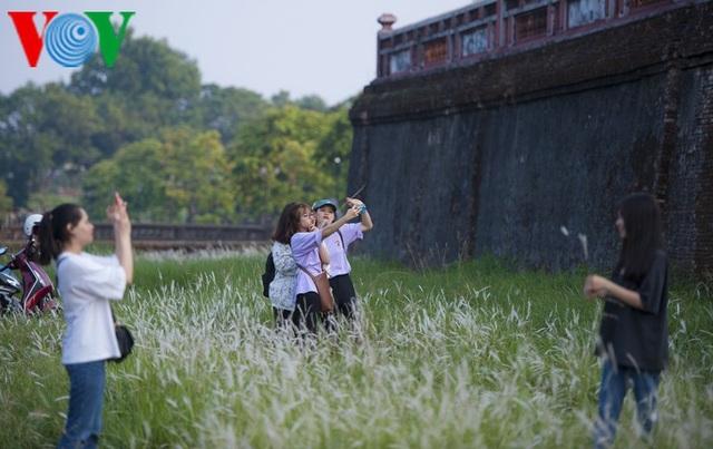 Thơ mộng điểm check in cỏ lau giữa Cố Đô Huế - 14