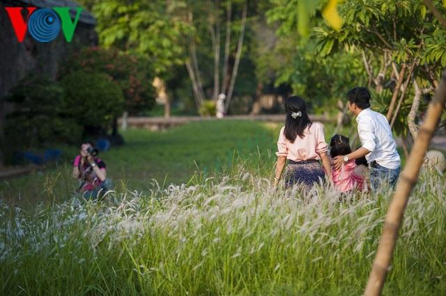 Thơ mộng điểm check in cỏ lau giữa Cố Đô Huế - 2