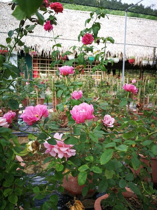 Người đàn ông bỏ phố lên rừng dựng nông trại hoa hồng  - 6