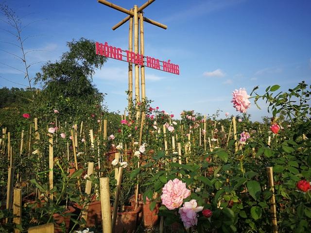 Người đàn ông bỏ phố lên rừng dựng nông trại hoa hồng  - 3