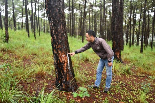 Bắt đối tượng chở người đi hạ độc rừng thông cổ thụ cạnh quốc lộ - 1