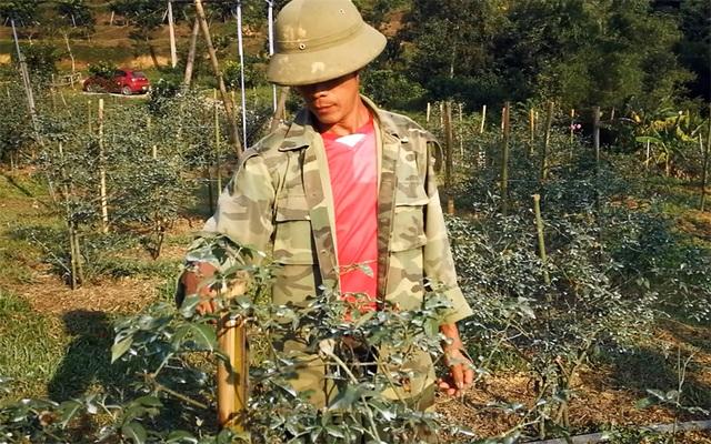 Người đàn ông bỏ phố lên rừng dựng nông trại hoa hồng  - 1