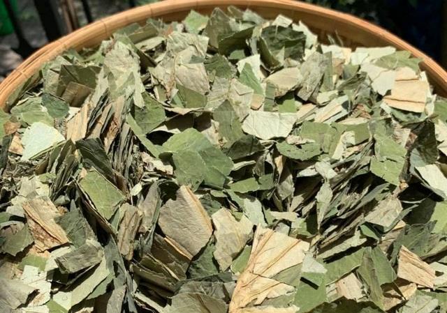 Loại lá mọc tràn ao bùn Việt Nam, 400 ngàn đồng/kg, chị em ưa dùng để giữ eo - 1