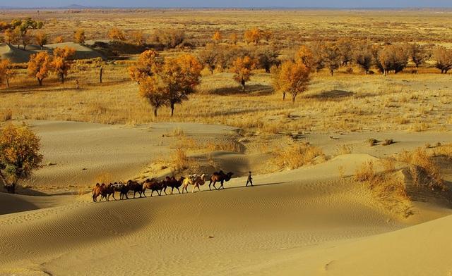 Đường cao tốc giữa sa mạc lớn nhất Trung Quốc dài 136 km - 3