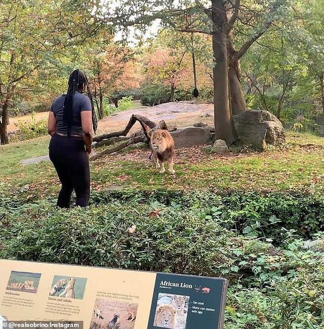 """Cô gái bị mắng """"điên rồ"""" khi trèo vào chuồng trêu đùa với sư tử - 2"""