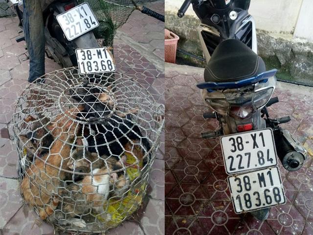 Bị phát hiện đang trộm mèo, 2 đối tượng vứt xe máy lội ruộng bỏ trốn