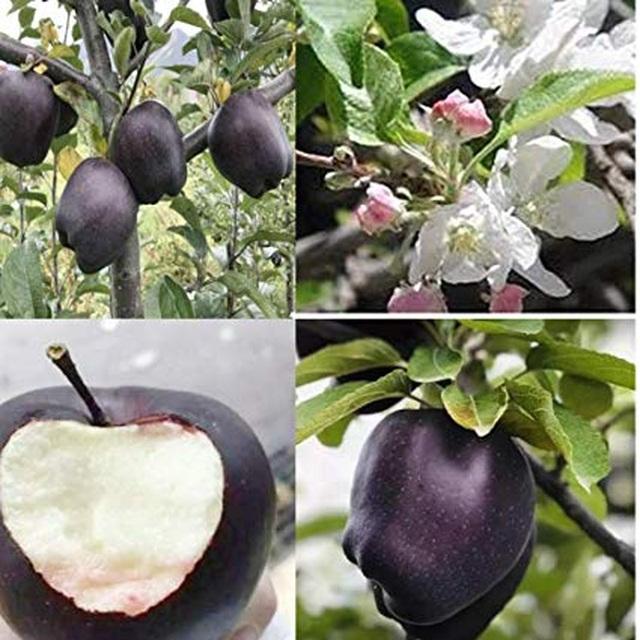 Quả táo đen xì đen xịt độc, lạ, ngon, bổ giá gần nửa triệu mỗi quả - 9