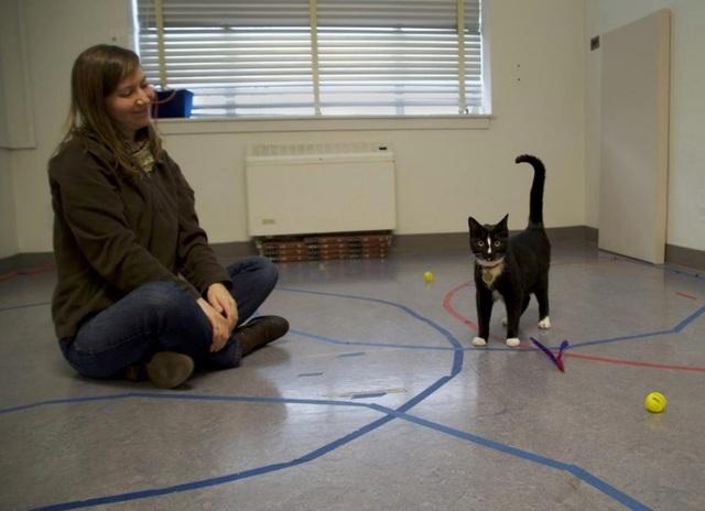 Không chỉ chó, mèo cũng có tình cảm với chủ nhân - 1
