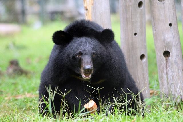 Minh tinh Maggie Q thăm mộ một con gấu ở Tam Đảo - 14