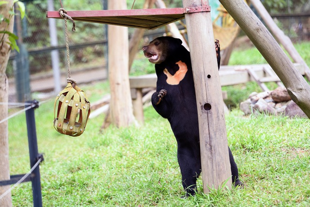 Minh tinh Maggie Q thăm mộ một con gấu ở Tam Đảo - 13