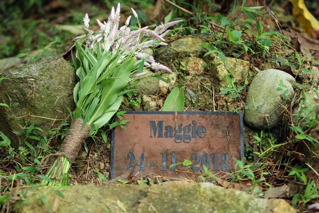 Minh tinh Maggie Q thăm mộ một con gấu ở Tam Đảo - 7