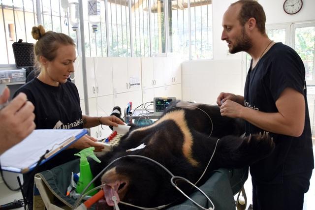 Minh tinh Maggie Q thăm mộ một con gấu ở Tam Đảo - 12