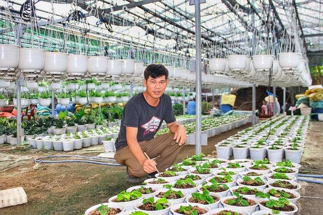 Đà Nẵng: Trồng hoa chậu mini công nghệ cao, kiếm bộn tiền - 1