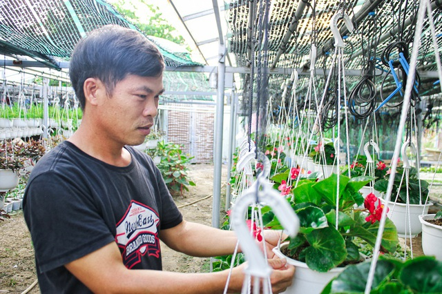 Đà Nẵng: Trồng hoa chậu mini công nghệ cao, kiếm bộn tiền - 2
