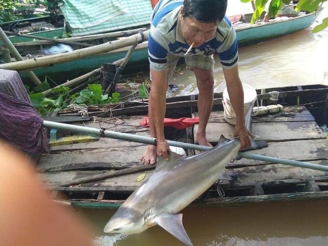 Người dân Đồng Tháp bắt được cá lạ, nghi cá mập - 1