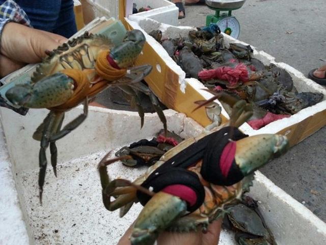 Sốc: Giá cua biển bán sang Trung Quốc rẻ bất thường - 1