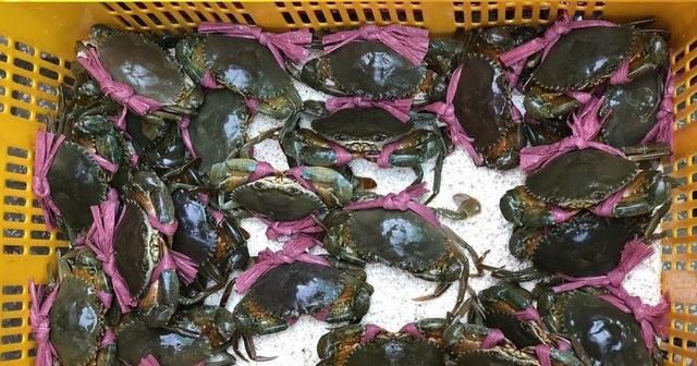 Sốc: Giá cua biển bán sang Trung Quốc rẻ bất thường - 2