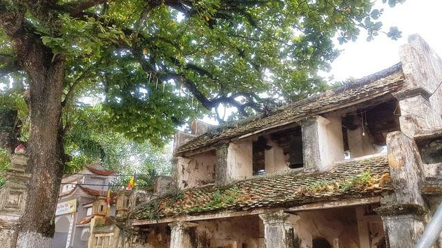 Ngôi chùa cổ có 2 cây di sản đầu tiên ở Ninh Bình - 3
