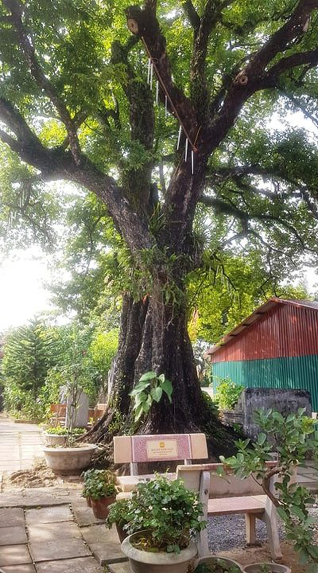 Ngôi chùa cổ có 2 cây di sản đầu tiên ở Ninh Bình - 13