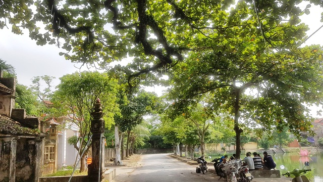 Ngôi chùa cổ có 2 cây di sản đầu tiên ở Ninh Bình - 5