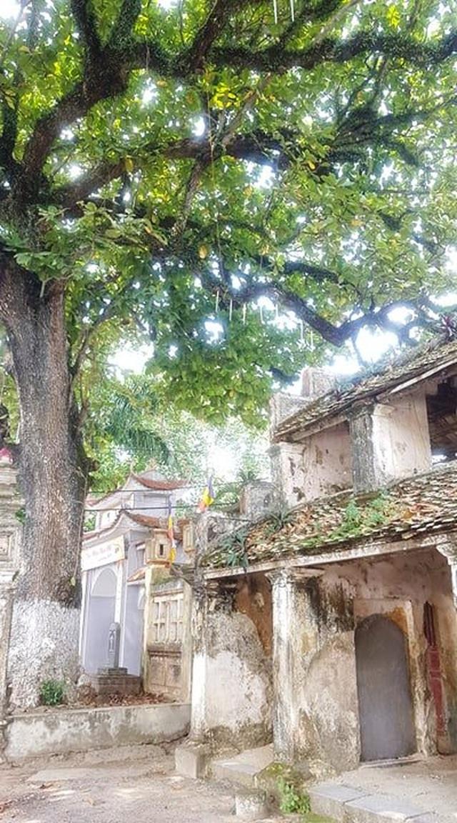 Ngôi chùa cổ có 2 cây di sản đầu tiên ở Ninh Bình - 4