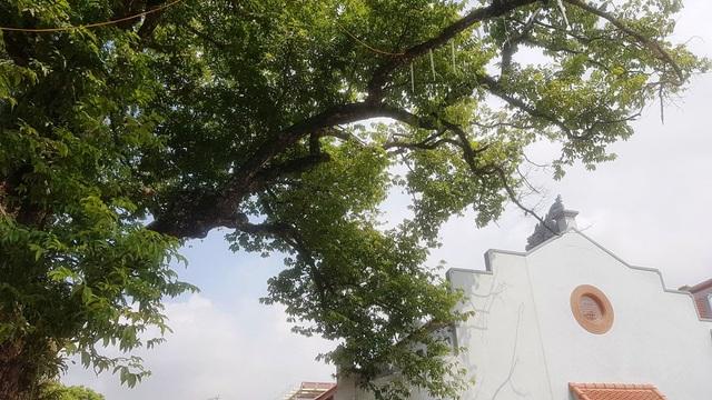 Ngôi chùa cổ có 2 cây di sản đầu tiên ở Ninh Bình - 10