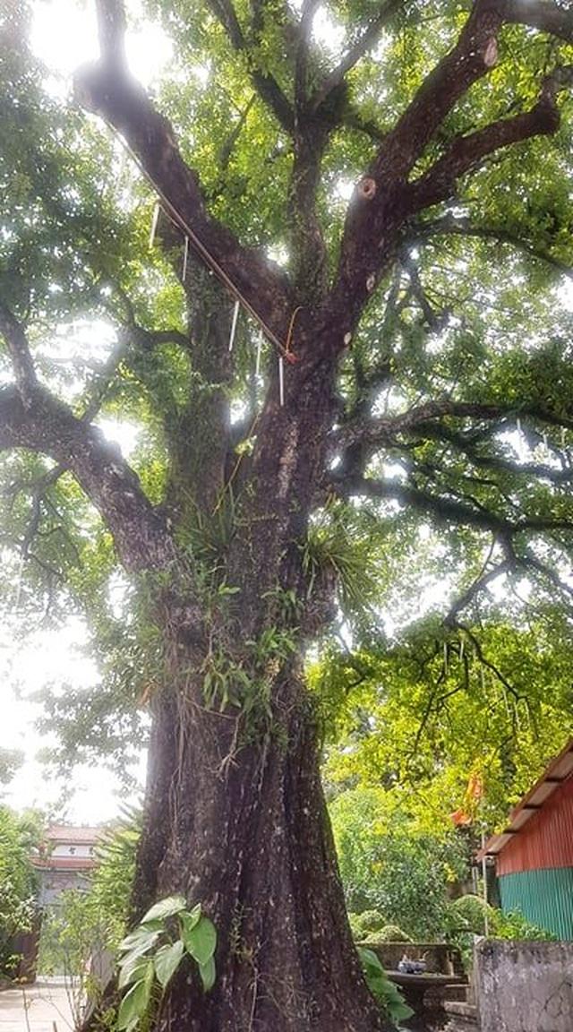 Ngôi chùa cổ có 2 cây di sản đầu tiên ở Ninh Bình - 9