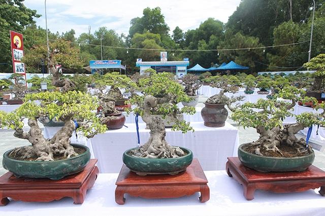 Mãn nhãn với vẻ đẹp kỳ dị của hàng trăm cây sanh bonsai ở Thanh Hóa - 1