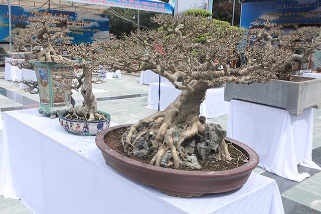Mãn nhãn với vẻ đẹp kỳ dị của hàng trăm cây sanh bonsai ở Thanh Hóa - 10