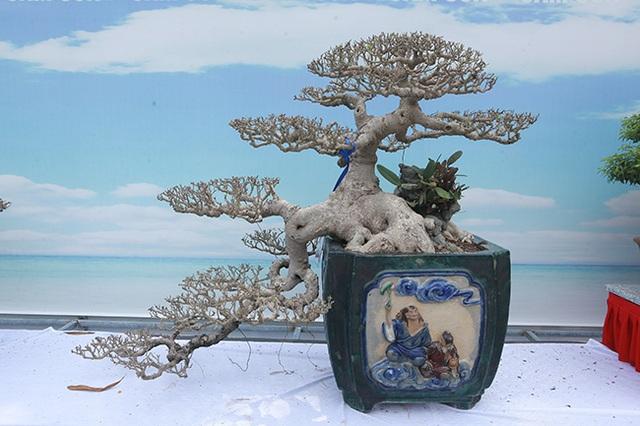 Mãn nhãn với vẻ đẹp kỳ dị của hàng trăm cây sanh bonsai ở Thanh Hóa - 11