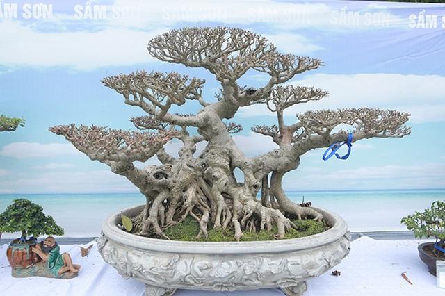 Mãn nhãn với vẻ đẹp kỳ dị của hàng trăm cây sanh bonsai ở Thanh Hóa - 12
