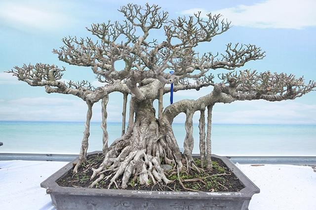 Mãn nhãn với vẻ đẹp kỳ dị của hàng trăm cây sanh bonsai ở Thanh Hóa - 13