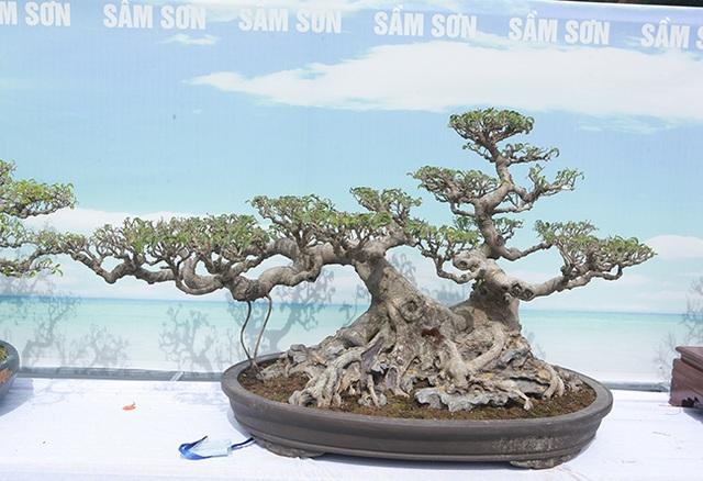 Mãn nhãn với vẻ đẹp kỳ dị của hàng trăm cây sanh bonsai ở Thanh Hóa - 14
