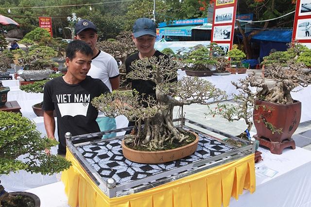 Mãn nhãn với vẻ đẹp kỳ dị của hàng trăm cây sanh bonsai ở Thanh Hóa - 3