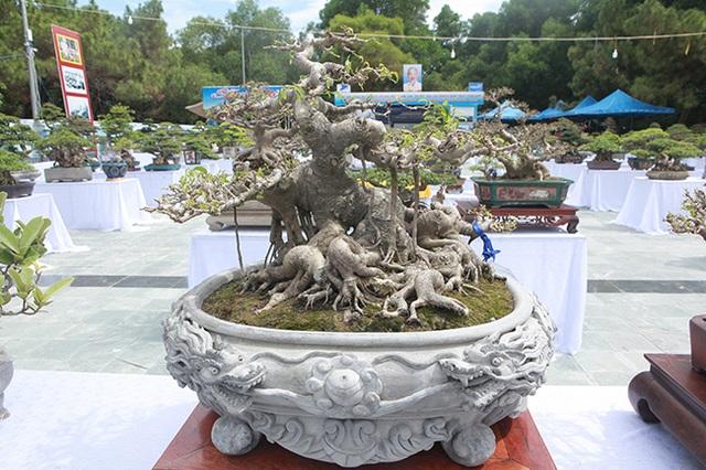 Mãn nhãn với vẻ đẹp kỳ dị của hàng trăm cây sanh bonsai ở Thanh Hóa - 6