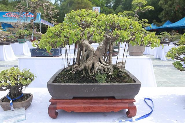 Mãn nhãn với vẻ đẹp kỳ dị của hàng trăm cây sanh bonsai ở Thanh Hóa - 8
