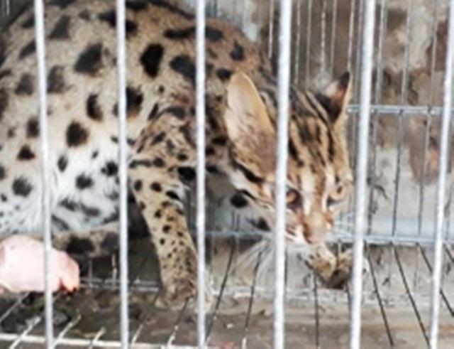 Một người đàn ông ở Cà Mau tử vong nghi sau khi bị mèo cắn - 1