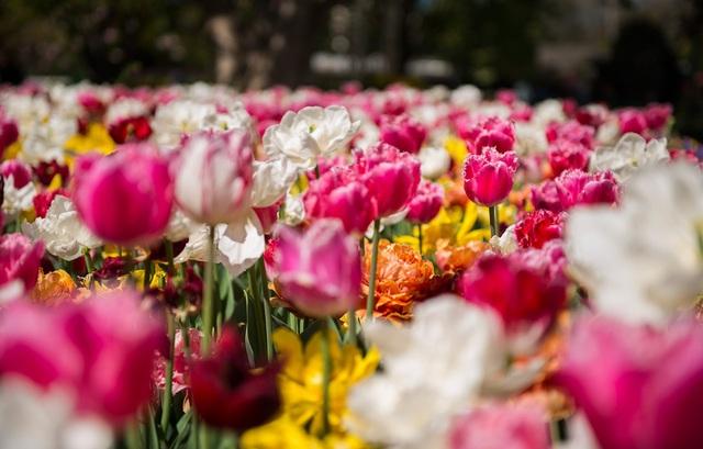 Mùa xuân đẹp như tranh vẽ ở phía bên kia trái đất - 3