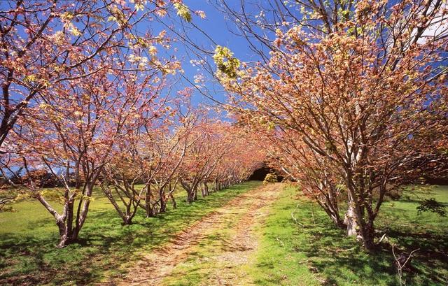 Mùa xuân đẹp như tranh vẽ ở phía bên kia trái đất - 4