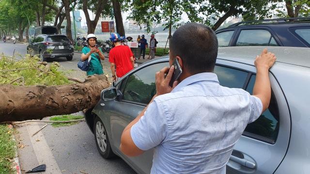 """Hà Nội: Cây phượng """"khủng"""" đổ trúng đầu xe ô tô, tài xế hú vía - 2"""