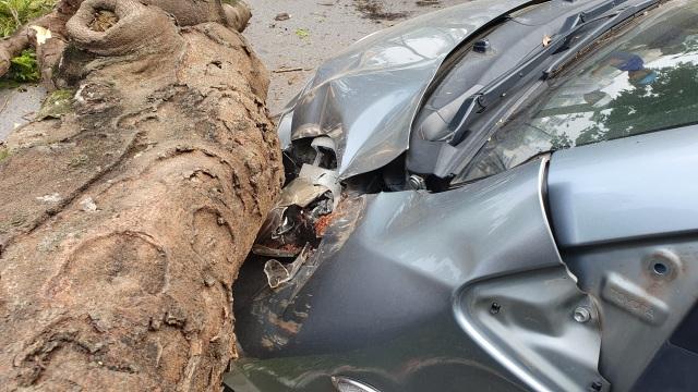 """Hà Nội: Cây phượng """"khủng"""" đổ trúng đầu xe ô tô, tài xế hú vía - 3"""