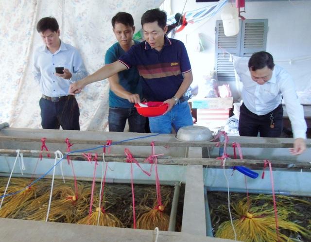 Vĩnh Long: Sau 4 năm thất bại, thu tiền lời cả tỷ đồng từ con lươn giống - 4